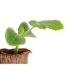 Plant d'herbes aromatiques bio, variétés aux choix  produits à  Fouchères (10)